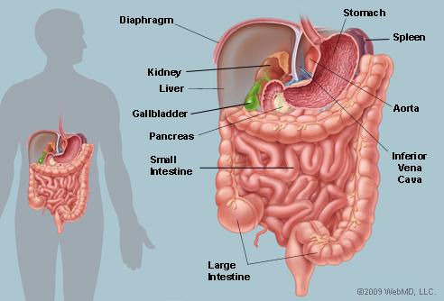 abdomin-