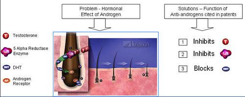antiandrogen