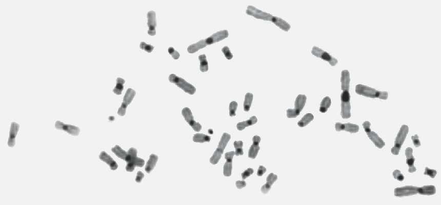 c-banding stain
