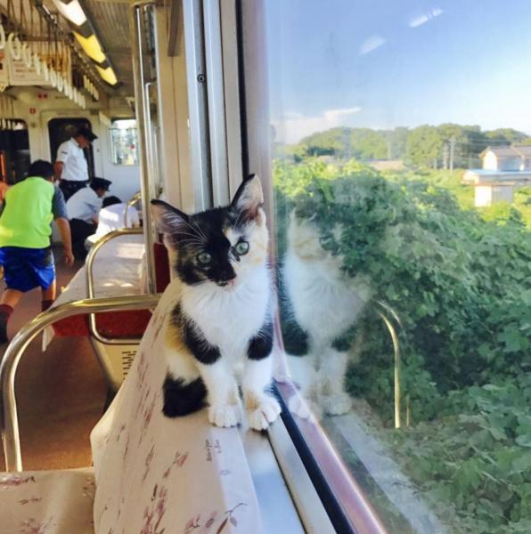 cat-train