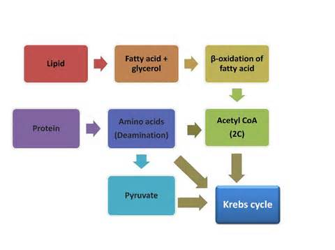 catabolize