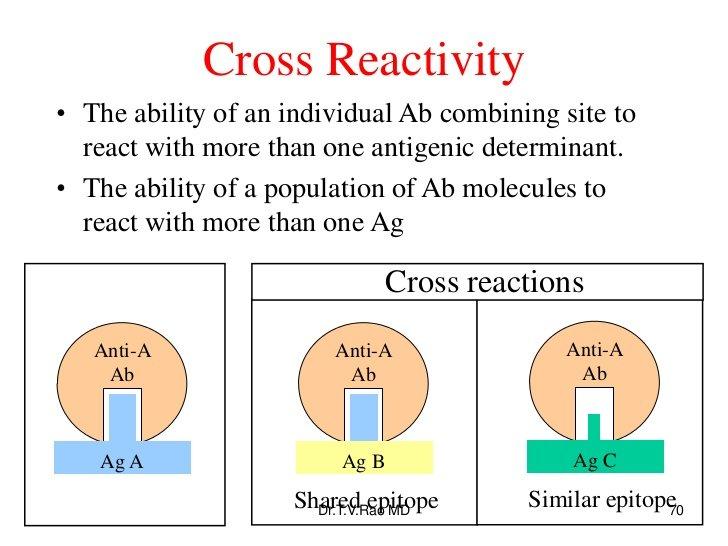 cross-reacting antibody
