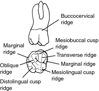 dental ridge