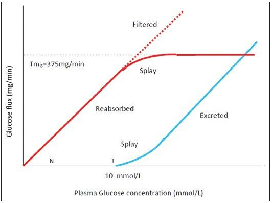 glucose transport maximum