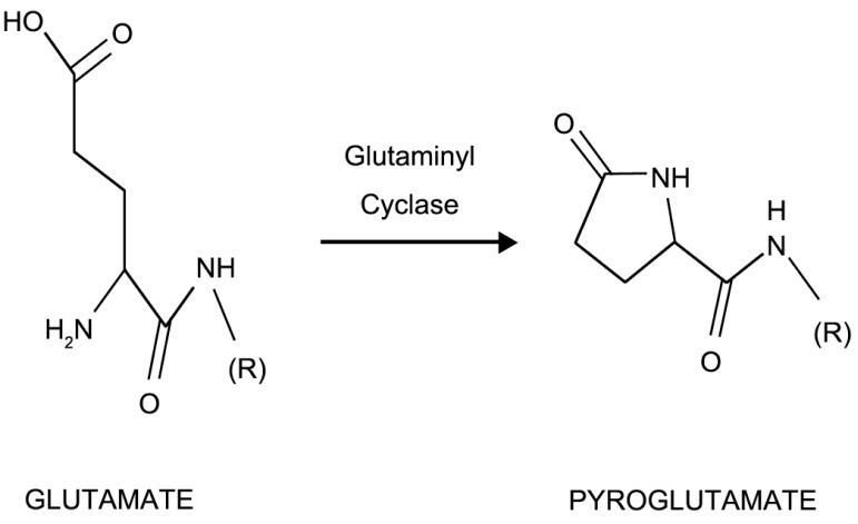 glutaminyl