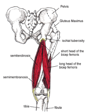 ischiofibular