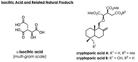 isocitric acid  isocitric acid