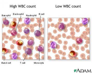 leukocytolysis