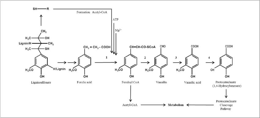 lignin sulfonate