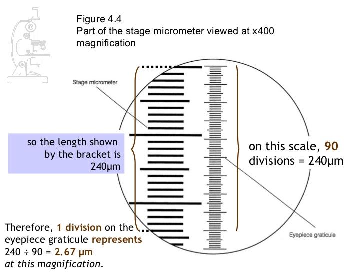 micrometry