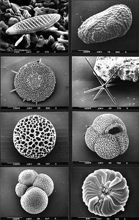 micropaleontology