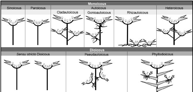monoicous