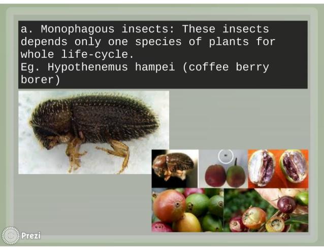 monophagous