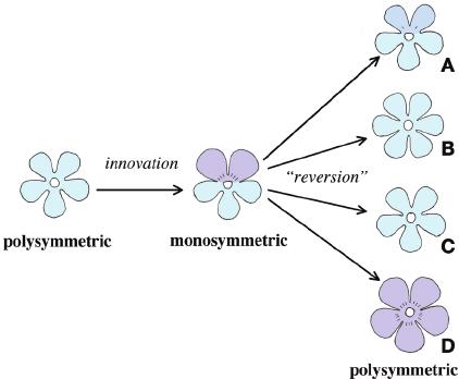 monosymmetric