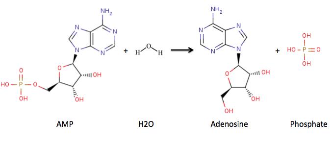 nucleotidase