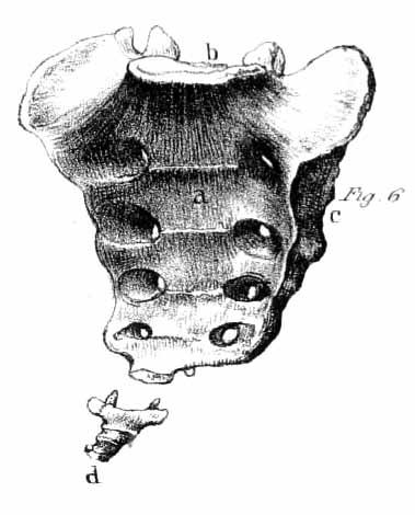 os coccygis