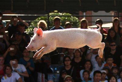 pig-jump