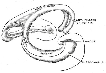 pillars of fornix