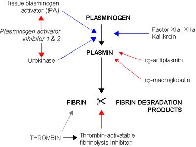 plasminogen