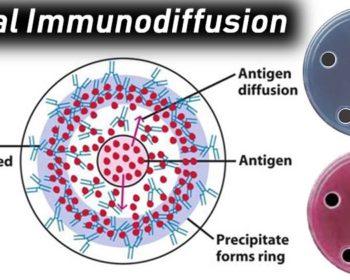radioimmunodiffusion