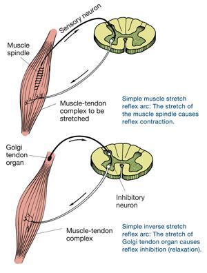 reflex inhibition