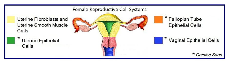 reproductive cell