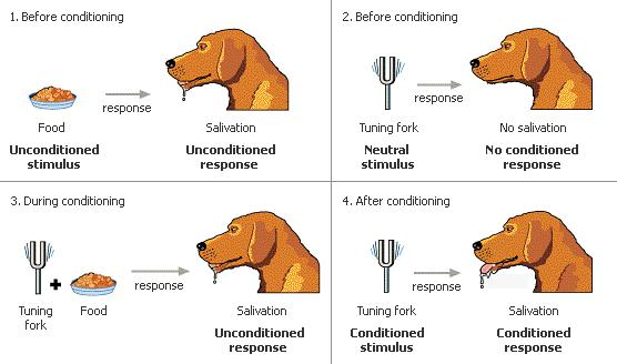 respondent conditioning