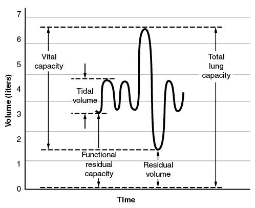 resting tidal volume