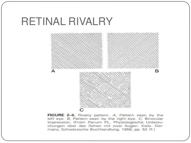 retinal rivalry