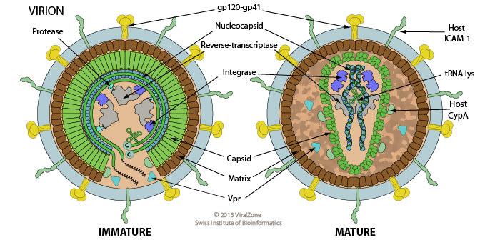 retroviridae
