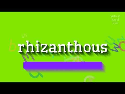 rhizanthous