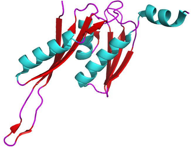 ribonucleoprotein