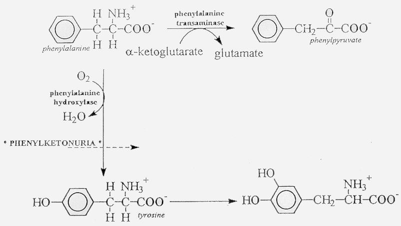 saccharometabolism