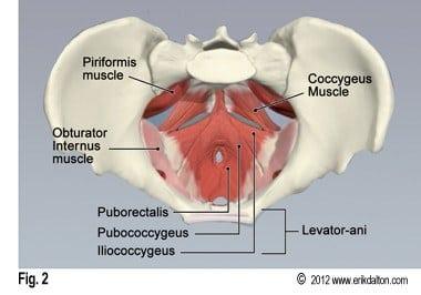 sacrococcygeal muscle