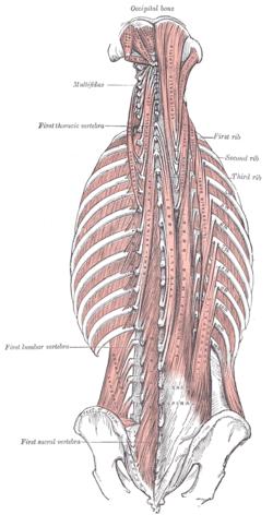 sacrospinal