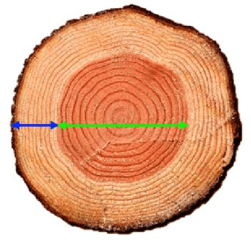 sapwood