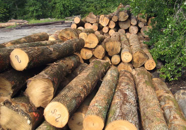saw log