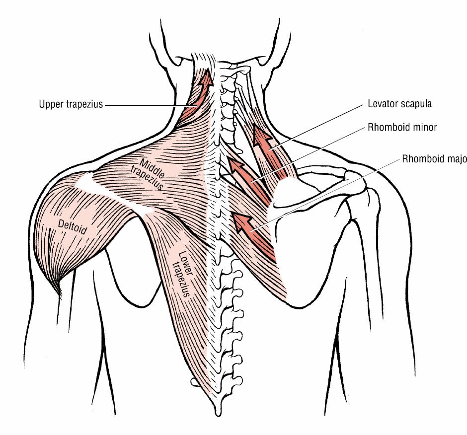scapulocostal syndrome