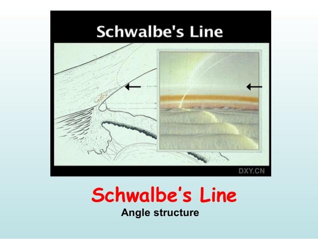 schwalbe's ring