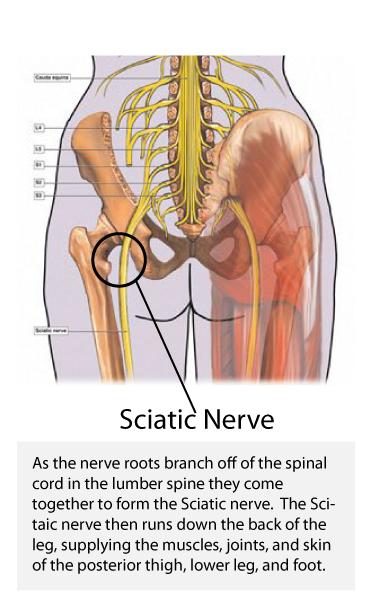 sciatic spine