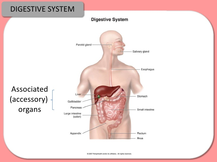 secondary digestion