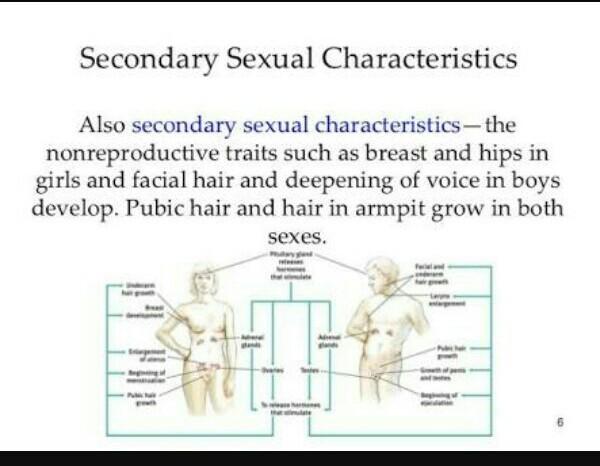 School girls fucking nude porn