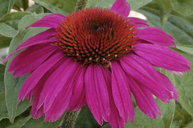 seed-bearing plant