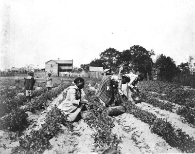 sharecrop