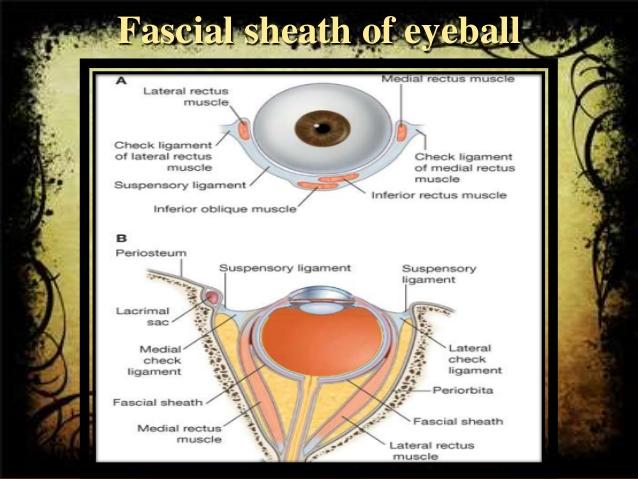 sheath of eyeball