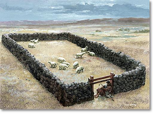 sheep-fold