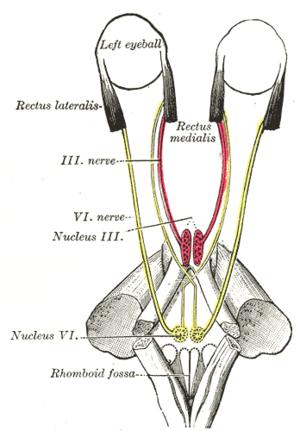 sixth cranial nerve