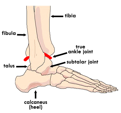 talocrural joint