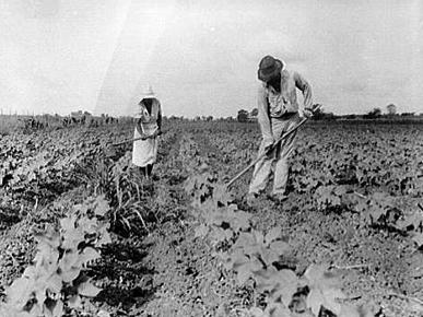 tenant farmer
