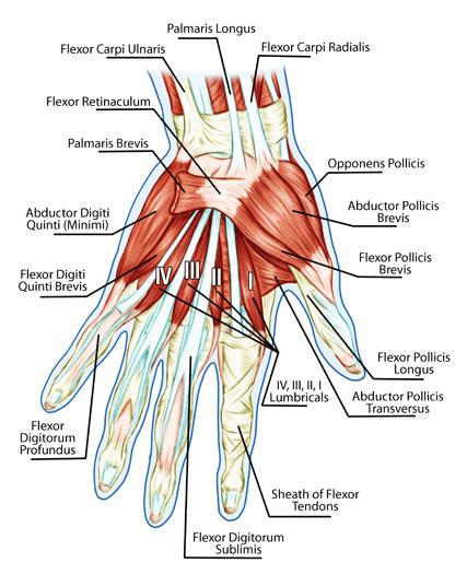 tendolysis